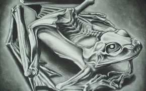 Picture 1946, Mumified Frog, Maurits Cornelis Escher