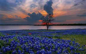 Picture sunset, flowers, shore