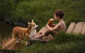 Picture grass, animal, dog, boy, bread, child, dog, baton, Corgi, mostok, Козлова Татьяна