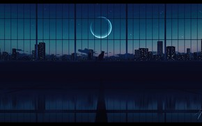 Picture cat, night, the city, the moon