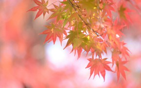 Picture autumn, leaves, background, beauty
