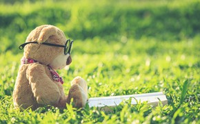 Picture summer, grass, toy, bear, glasses, bear, book, summer, vintage, bear, lawn, retro, teddy, lonely, cute, …
