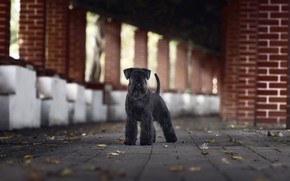 Picture background, street, dog