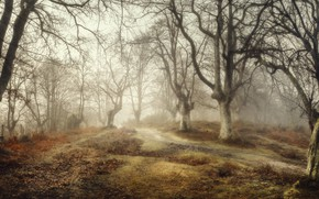 Picture forest, fog, Spain, Basque Country