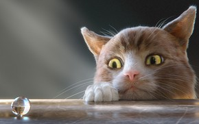Picture Mustachioed, Хитрая мордаха, Любопытный кот