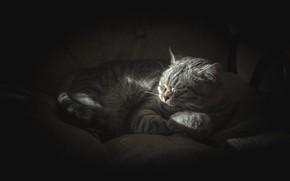 Picture cat, cat, light, comfort, the dark background, grey, sleep, morning, sleeping, striped