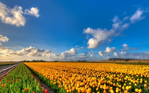 Picture field, clouds, flowers, nature, blue, beauty, positive, spring, yellow, tulips, red, the beds, Netherlands, buds, …