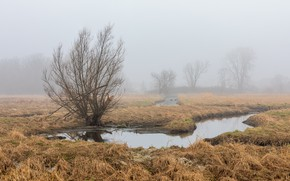 Picture field, fog, spring