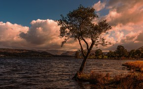 Picture the sky, clouds, tree, shore, pond, photoart