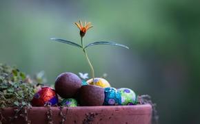 Picture flower, candy, a flowerpot, Fleur Walton