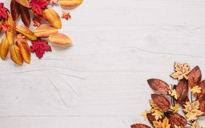 Picture autumn, background, leaves, autumn, leaves, Board, wood, colorful, maple, background, autumn, maple