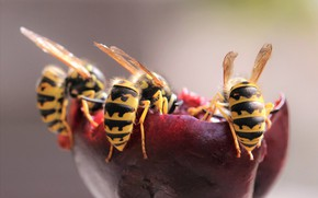 Picture macro, nature, wasps