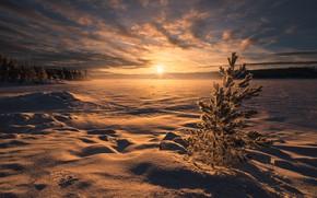 Picture winter, snow, sunset, lake, Norway, the snow, Norway, RINGERIKE, Ringerike