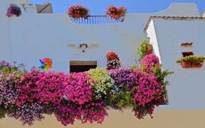 Picture flowers, house, wall, Italy, Монополи
