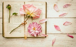 Picture flowers, rose, petals, book