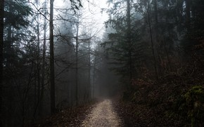 Picture forest, the sky, trees, nature, fog, overcast, path