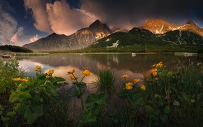 Picture the sky, water, flowers, mountains, lake, Slovakia, Karol Offers