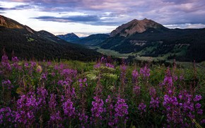 Picture field, forest, summer, the sky, clouds, landscape, flowers, mountains, nature, the slopes, tops, the evening, ...