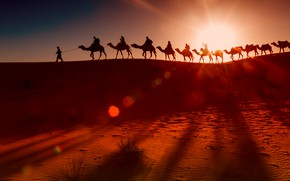 Picture desert, camels, the herd, the Bedouins