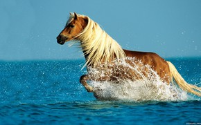 Picture sea, water, horse