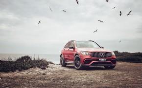 Picture Red, Seagulls, Coast, Car, Mercedes-AMG GLC 63 S 4MATIC+