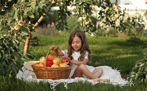 Picture apples, harvest, girl