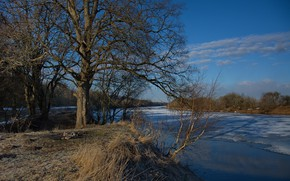 Picture ice, river, tree, shore, morning