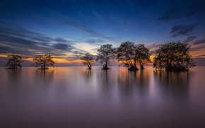 Picture trees, lake, the evening, Thailand