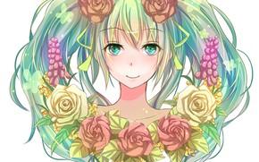 Picture roses, Vocaloid, Hatsune Miku