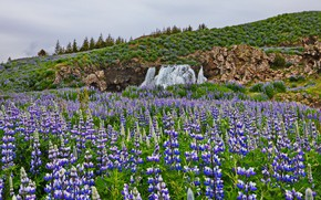 Picture summer, the sky, flowers, mountains, rocks, hills, waterfall, ate, meadow, blue, lupins