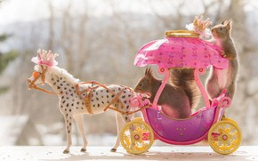 Picture animals, toy, animals, pair, coach, a couple, horse, proteins, rodents