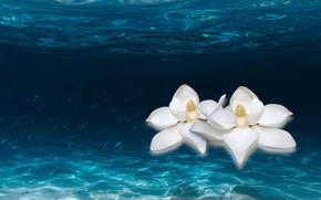 Picture ocean, water, floating lilies, river.