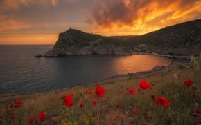Picture landscape, sunset, flowers, nature, rocks, shore, Maki, Bay, the evening, Crimea, Balaclava