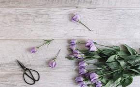 Picture bouquet, Beautiful, wood, flowers, purple, Eustoma, Decor