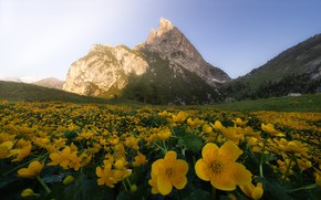 Picture summer, flowers, mountains, yellow, meadow
