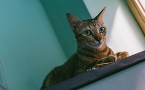 Picture cat, cat, look, face, light, grey, background, wall, portrait, window, lies, sill, striped, green eyes