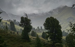 Picture trees, mountains, fog, overcast, foliage, the slopes