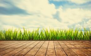 Picture summer, the sky, grass, the sun, green, summer, grass, sunshine, sky, wood