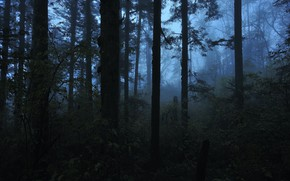 Picture forest, trees, nature, twilight