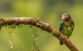 Picture rain, bird, branch, parrot