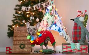 Picture dogs, dog, Christmas, costume, New year, tree, French bulldog, новогодние декорации