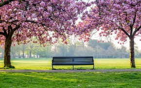 Picture trees, flowers, Park, spring, flowering, pink, blossom, park, tree, spring, bench