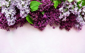 Picture background, lilac, composition, Olena Rudo