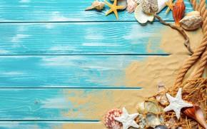 Picture sand, beach, shell, beach, wood, sand, marine, still life, seashells