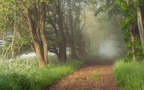 Picture road, forest, fog