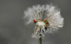 Picture summer, background, ladybug, insect
