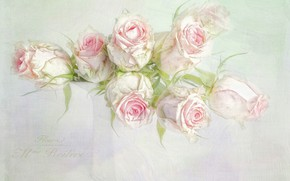 Picture flowers, the inscription, graphics, roses, bouquet, art, vase, pink, white, still life, painting, light background, …