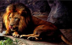 Picture Leo, mane, wild cat