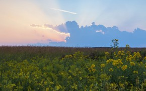 Picture the sky, landscape, flowers, nature, meadow