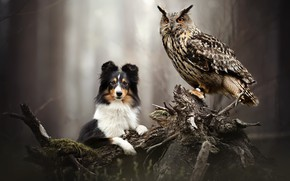 Picture nature, owl, dog